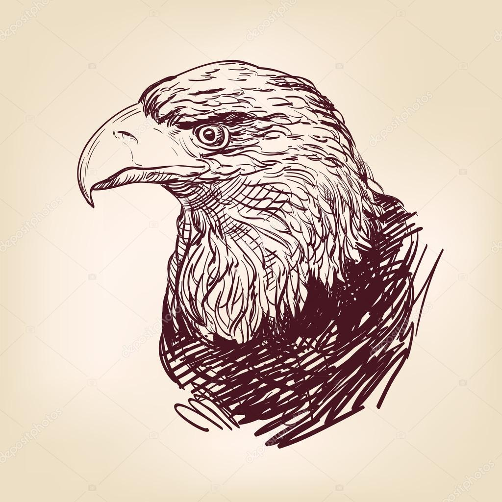 golden eagle drawing
