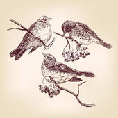 Kuş elle çizilmiş — Stok Vektör