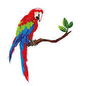 Colorful parrot — Stock Vector