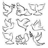 Abstract dove sketch set vector illustration — Stock Vector