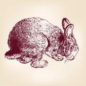 Bunny hand drawn vector llustration realistic sketch — Stock Vector