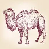 Ilustração vetorial camelo — Vetor de Stock