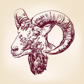 Goat hand drawn vector llustration realistic sketch — Stock vektor