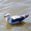 Stock Photo: Seagull