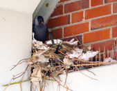 Nesting — Stock Photo