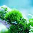 Moss Pillows — Stock Photo
