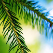 Fir Tree — Stock Photo #27928721