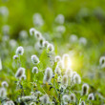 Grass plants — Stock Photo