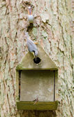 Nesting nuthatch — Stock Photo