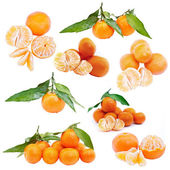 Set of mandarin — Stock Photo