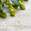 Green fresh hop border — Stock Photo