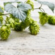 Stock Photo: Green plant hops