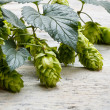 Green plant hops — Stock Photo #13334218