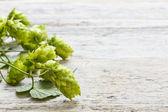 зеленое растение прыжков — Стоковое фото
