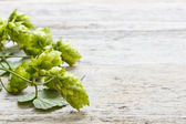 Green plant hops — Stock fotografie