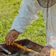 Beekeeper at work — Stockfoto #13852475