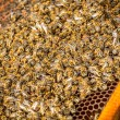 Stock Photo: Shot of bees