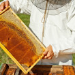 Beekeeper — Stock Photo