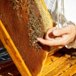 Apiarist — Stock Photo #13852481