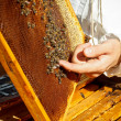 Stock Photo: Apiarist