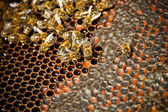 Bees — Zdjęcie stockowe