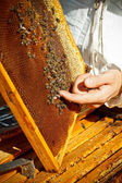 Apiarist is working in his apiary.  — Stock Photo