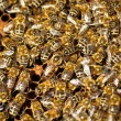 Stock Photo: Macro shot of bees