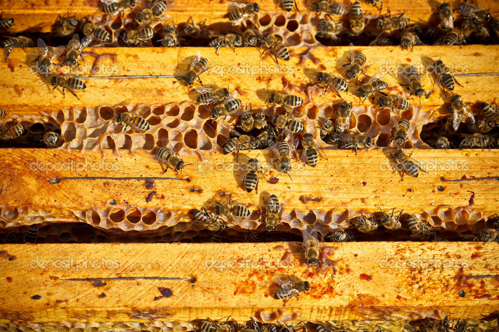 Many worker bees on honeycomb  — Stock Photo #13869152
