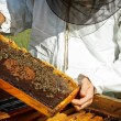 Foto Stock: Working apiarist