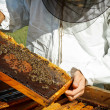 Stock Photo: Working apiarist