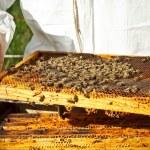 Beekeeper in an apiary — Stock Photo