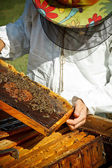 Working apiarist — Photo