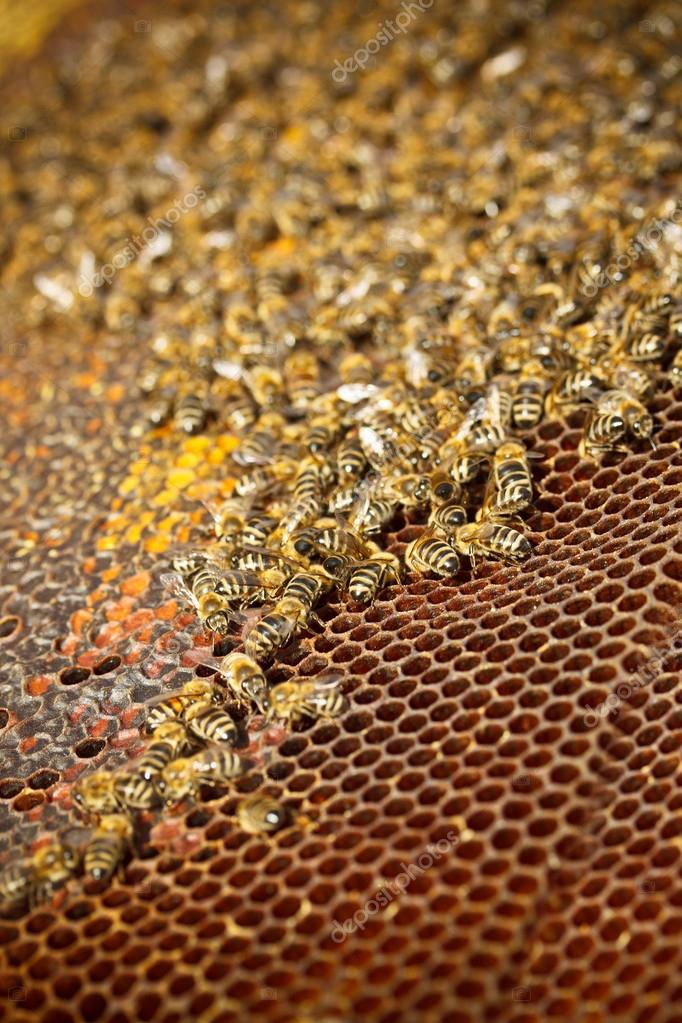 Honey cells and working bees  — Stock Photo #13885752