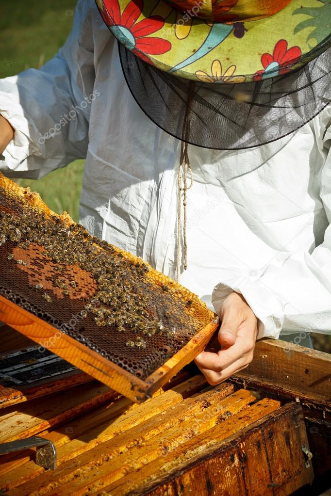Working apiarist and frame with bees.   Stock Photo #13885753