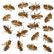 Bees collection — Stock Photo