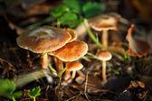 Gruppo di funghi — Foto Stock