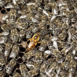 Macro shot of bees — Stock Photo #13931292
