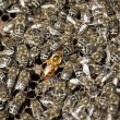 Macro shot of bees - Stock Photo
