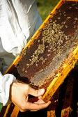 Pszczelarz — Zdjęcie stockowe
