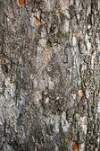 Tree crust — Stock Photo