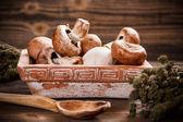 грибы свежие коричневый — Стоковое фото