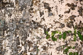 Close up of old wall texture — Stock Photo