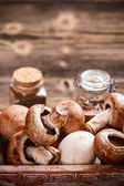 Fresh edible mushrooms — Stock Photo