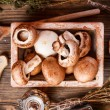 Brown mushrooms — Stock Photo