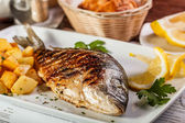 Dorado ryby — Stock fotografie