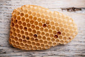 Honeycomb — Stock fotografie