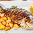 Bream fish — Stockfoto
