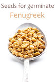 Fenugreek seeds — Fotografia Stock