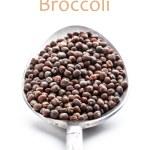 Broccoli seeds — Stock Photo