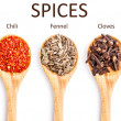 Collection of spices — Stock Photo #21486753